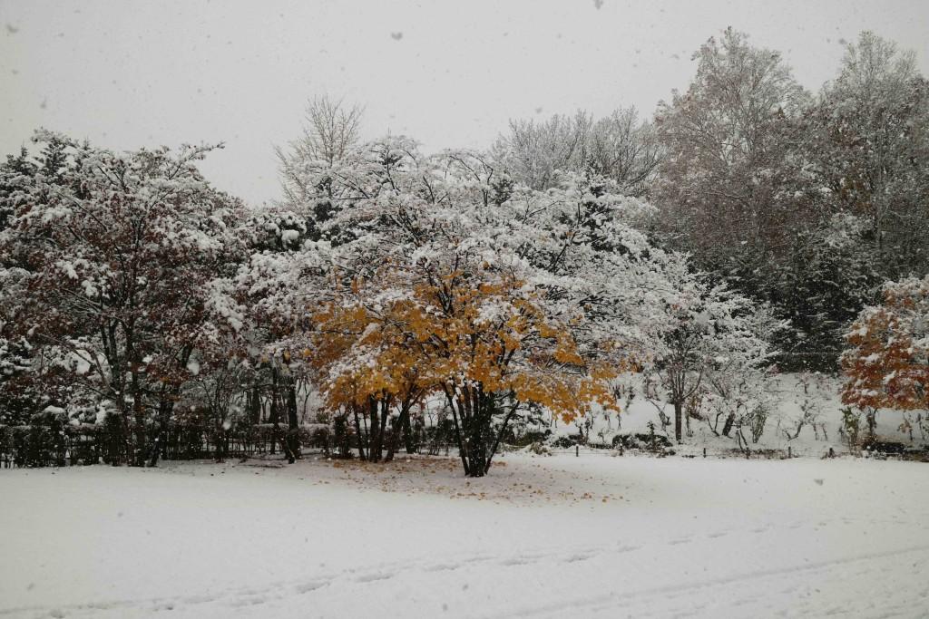 20161104-snow1