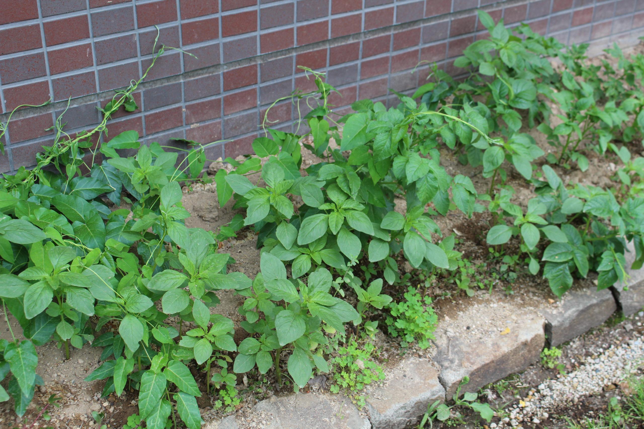 庭P-Garden Project】掘る。祈る。植える。 – AISプランニング